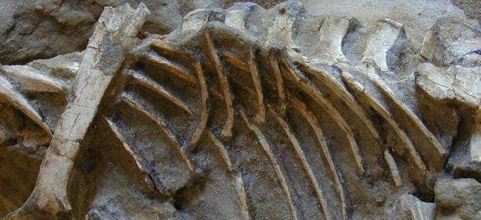 evolutionary-respiratory-morphology