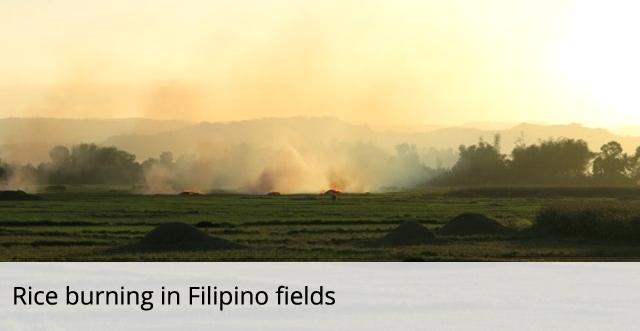 Rice burning in Filipino fields