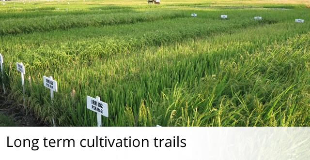 Long-term cultivation trials