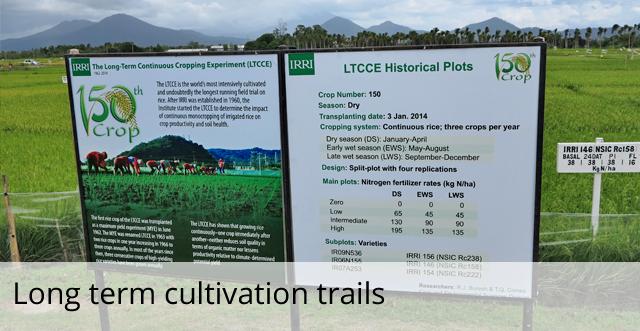 Long term cultivation trails